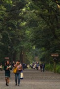 a large forest path within meiji jingu's grounds